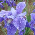 今日は、梅雨っぽい感じ