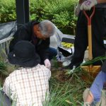 坂城から来たアヤメたちの花がらを切りました