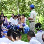 東北中学3年生の【リンゴ農家のお手伝いをする活動】