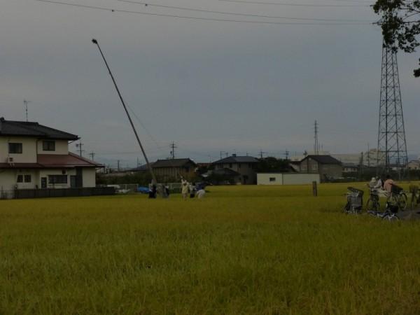 20日AM6:00、稲穂に囲まれた幟たて風景。