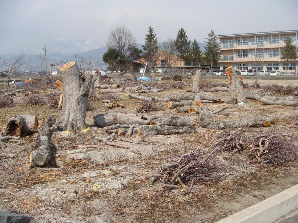 伐採されたリンゴの木