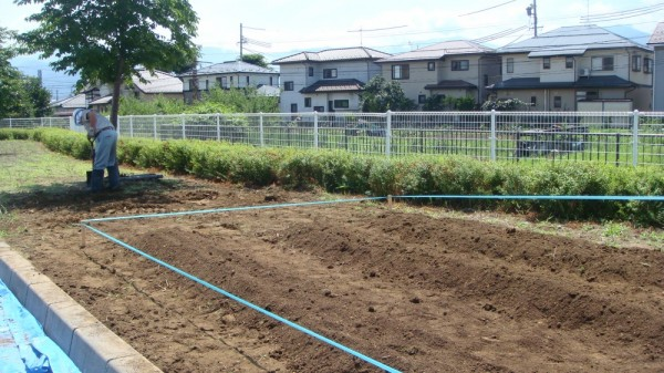 畝を三本作りました