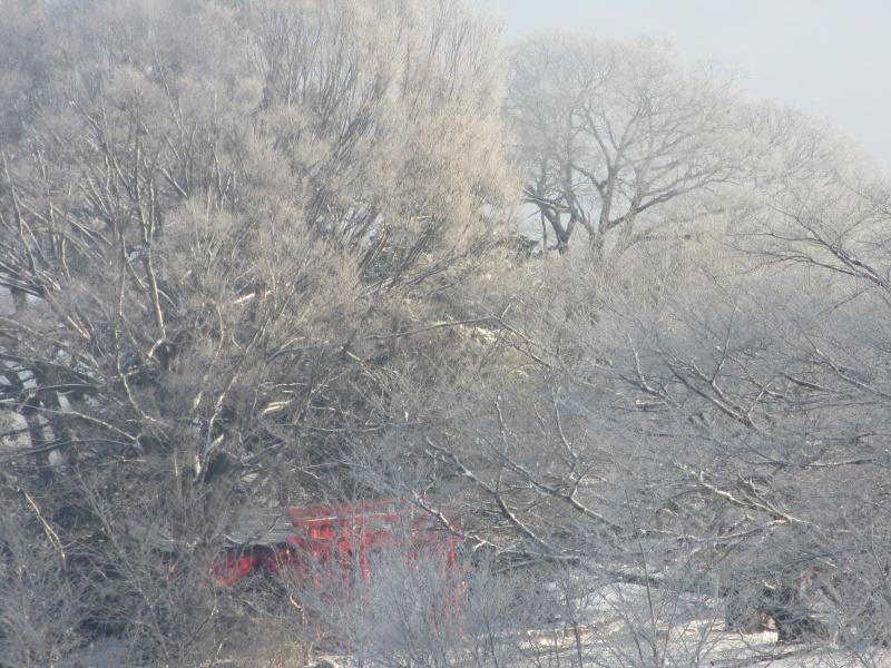 霧の中にかすかに見える お稲荷さんの赤い鳥居