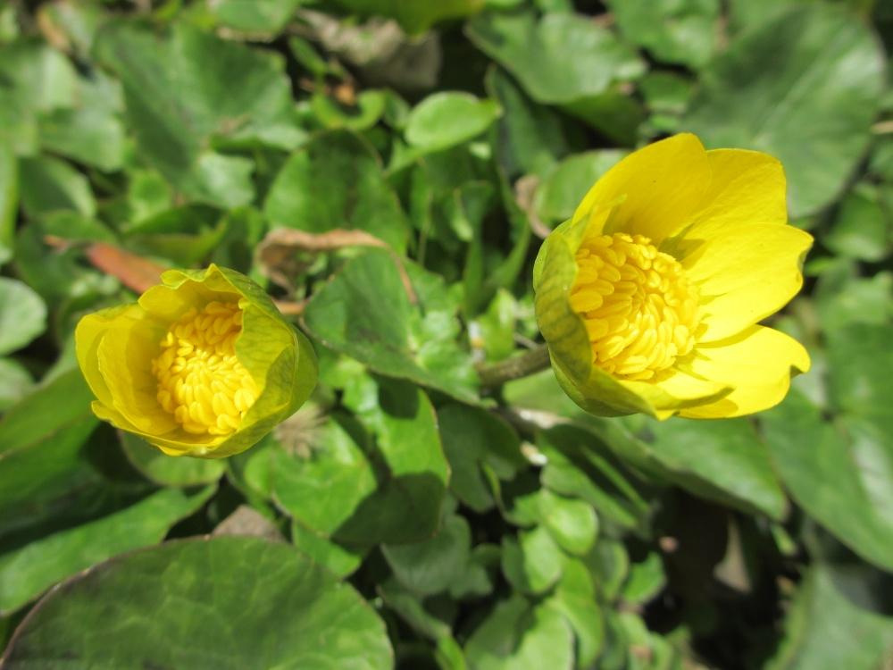 春を感じさせる黄色い花