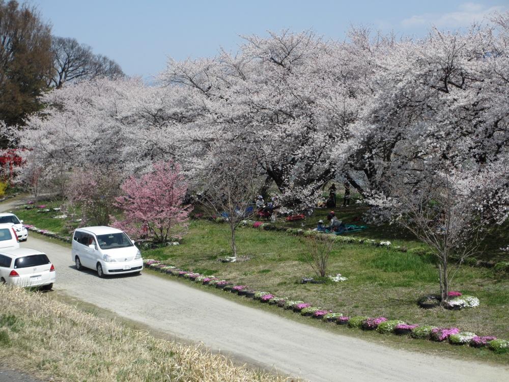 桜の下ではたくさんの方がお花見会