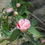 春祭り、つばめ そして百花繚乱 その2