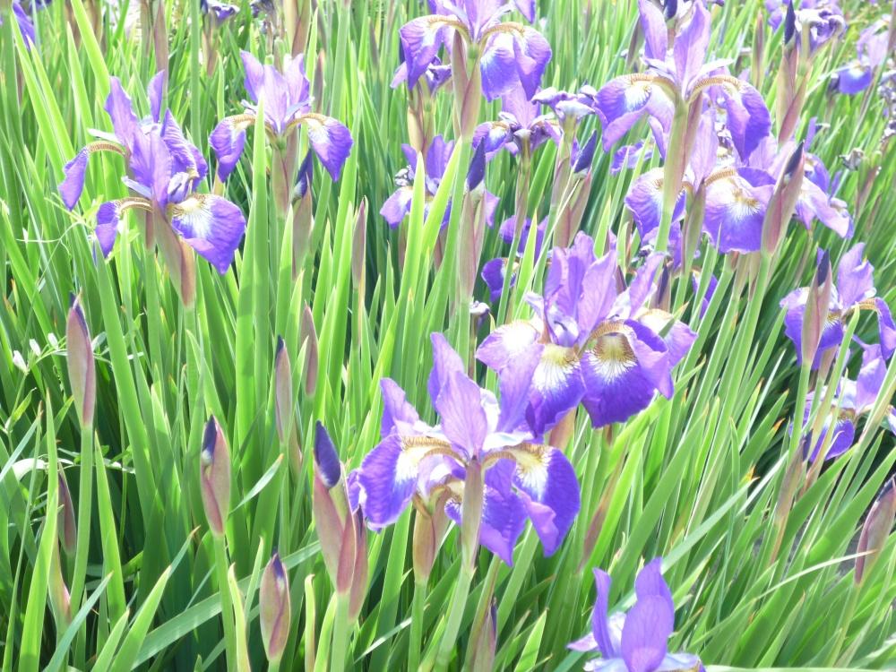 きれいな花がたくさん咲いていると心がはずみます