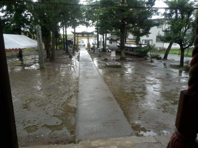 朝から雨が降り続いています