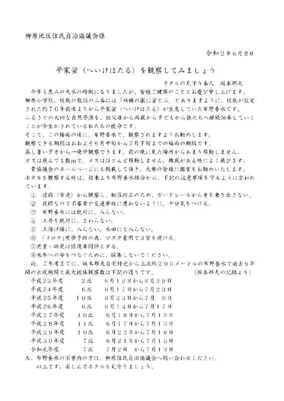 平家蛍 (2)のサムネイル