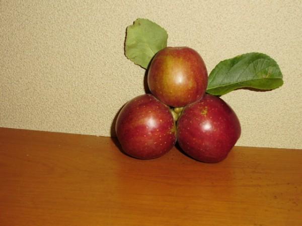 私りんごです