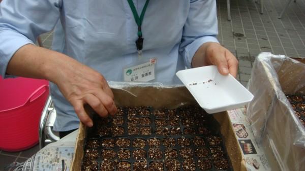 8月27日 直径1ミリほどの細かい種を蒔きました