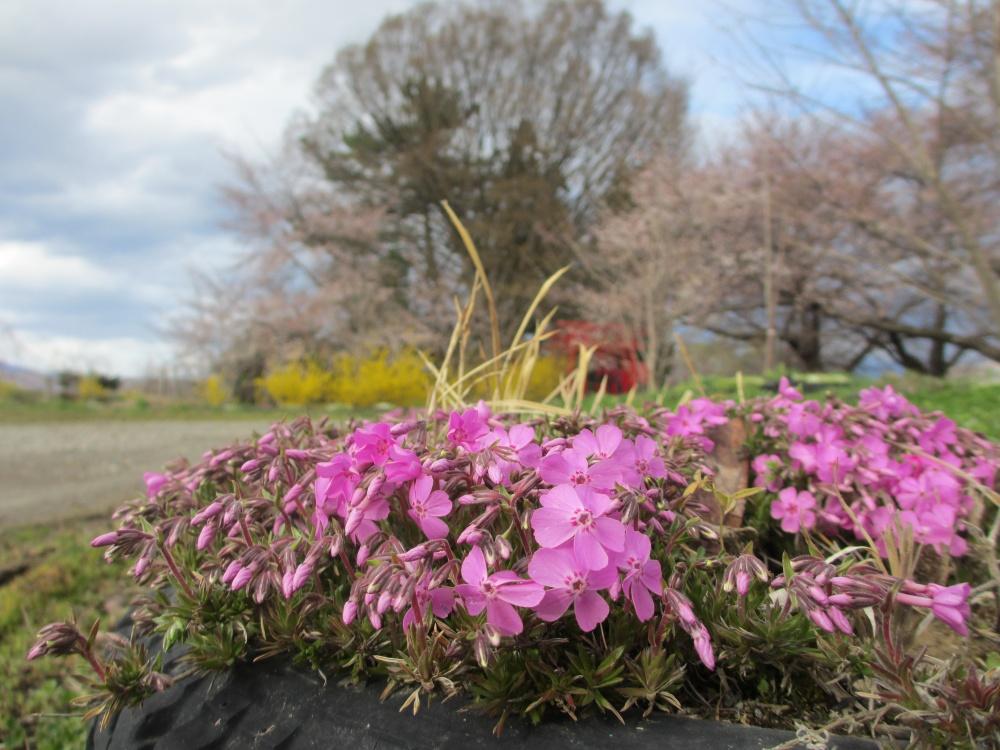 お稲荷さんの周りにはたくさんの花が咲いています