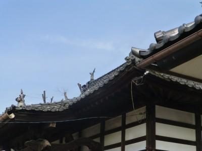 「AFTER」 恥ずかしそうに屋根の上から顔を見せている