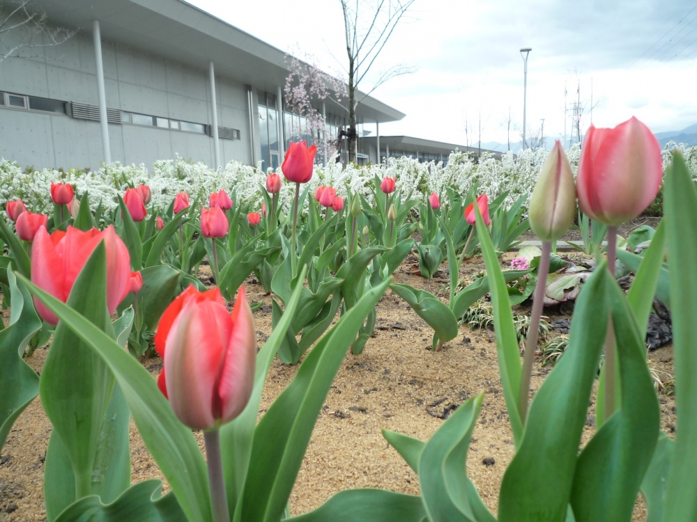 藤沢さんの咲かせている花